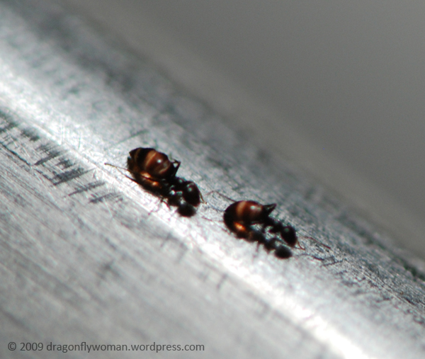 Tiny Ants In My Bathroom: What Can You Use To Kill Bed Bugs, Ground Wasp Pesticide