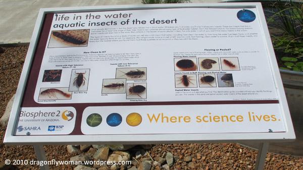 aquatic insects sign