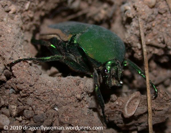Aquatic-beetles research-paper