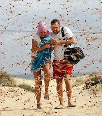 dragonfly swarm on beach