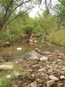 sampling at Rincon Creek