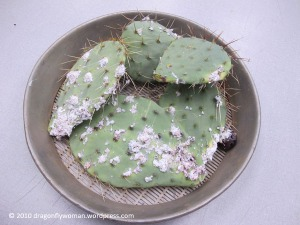 prickly pear paddles