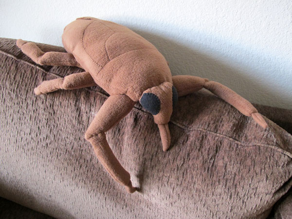 Brigette Zacharczenko's giant water bug plushie