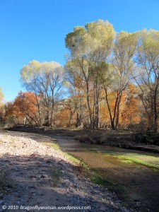 Arivaipa Creek looking upstream