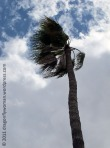 Wind and a palm tree