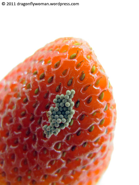 eggs on strawberry