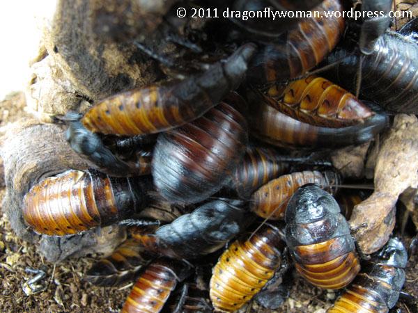 roach colony