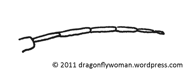 Drawings And Diagrams The Dragonfly Woman