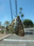 moth on the car