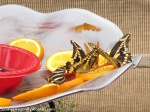 Marshall Butterfly Pavillion