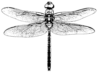 how to draw a realistic dragonfly