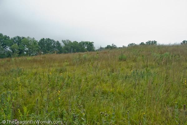 Midwestern field