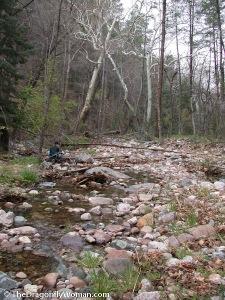 Reynold's Creek