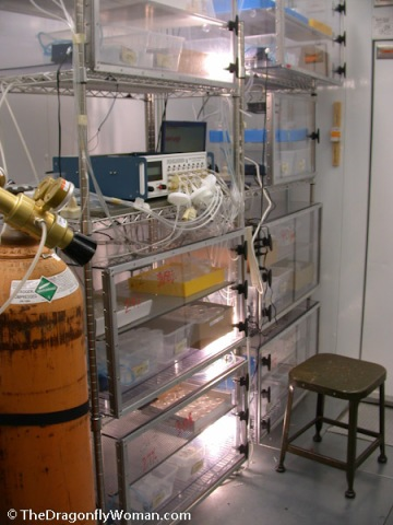 oxygen chambers