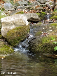 Ramsey Creek