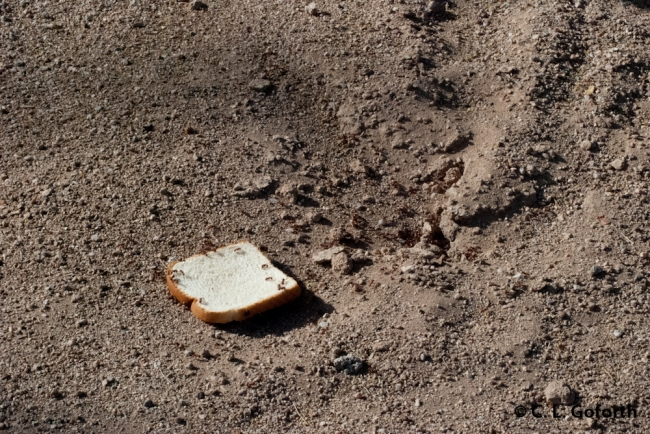 Pogos on Bread