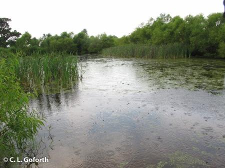 Prairie Ridge pond