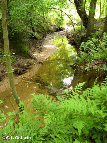 Prairie Ridge stream