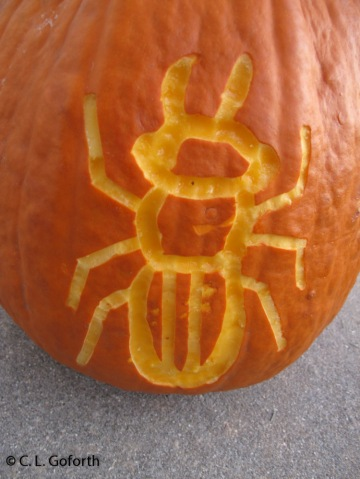 Beetle pumpkin