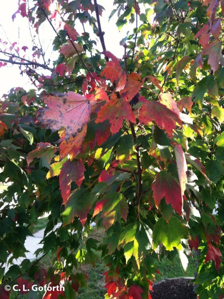 home leaves