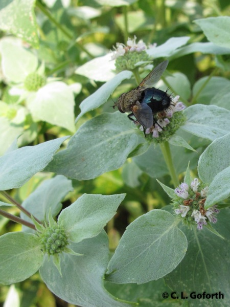 Fly on bush