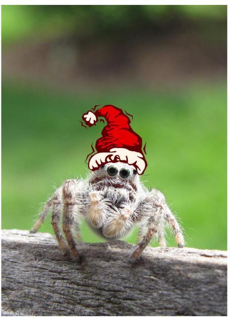 Santa saltie