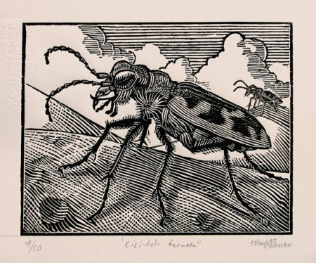 tiger beetle woodcut