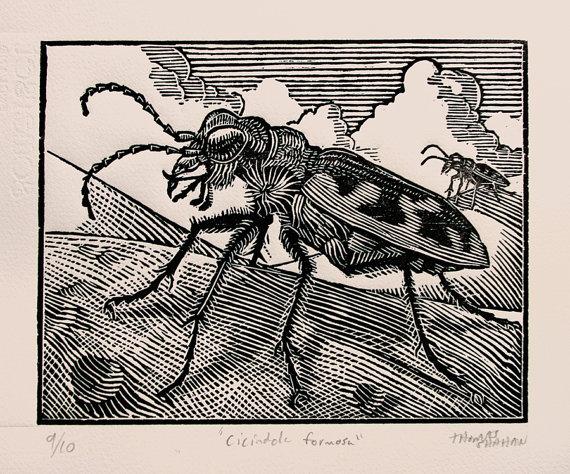 tiger beetle woodcut