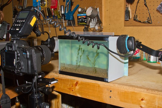 Steve Maxson's aquatic insect photo setup