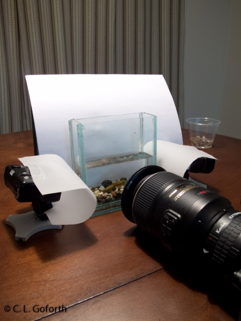 My aquatic insect photography setup