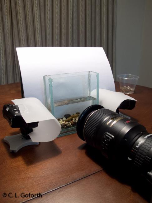 My aquatic insect photography setup