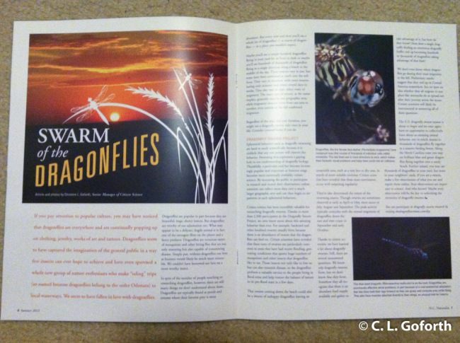 Dragonfly article