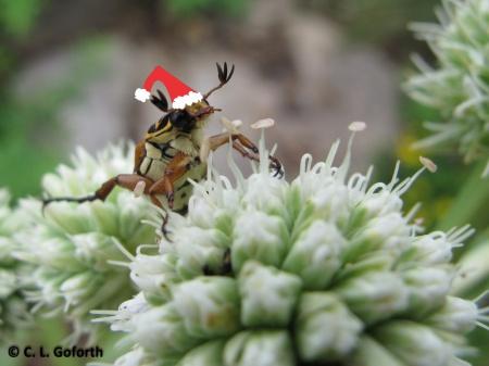 Santa scarab-2