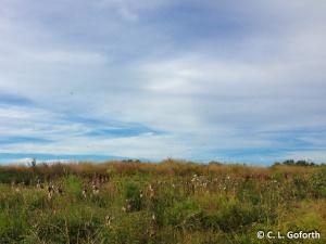 Swarm over upper prairie