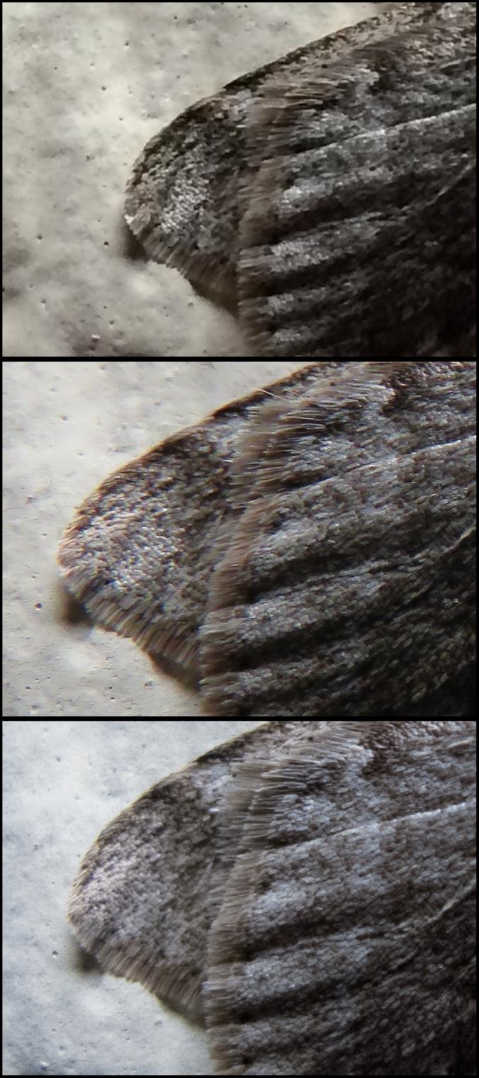 Moths enlarged wing details
