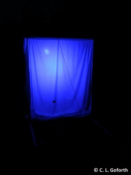 backyard blacklight