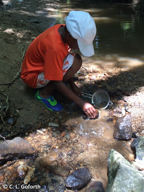 Kid collecting aquatic insects